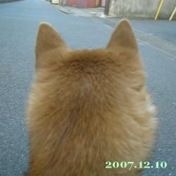 2007/12/10_1