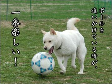 サッカー大好き-2コマ