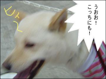 ペット博2006-3コマ