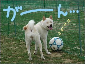 サッカー大好き-6コマ