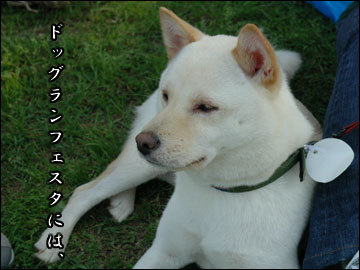 続・ドッグランフェスタ-1コマ