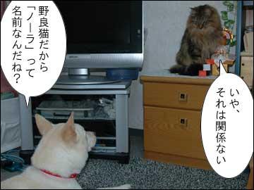 ピアノを弾く猫-4コマ