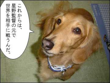 星野ジャパン-3コマ