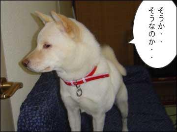 星野ジャパン-4コマ
