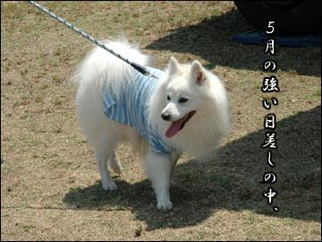 続・ドッグランフェスタ-4コマ