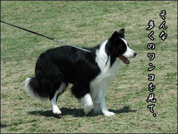 続・ドッグランフェスタ-9コマ