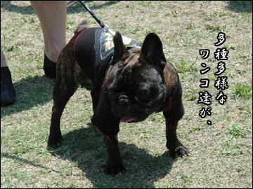 続・ドッグランフェスタ-2コマ