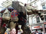 elephant07