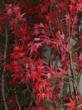 横浜のそごう前は、もう秋の気配が・・・(2,007/09/25 撮影)