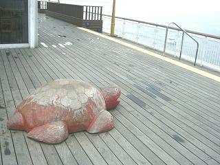 アクアラインの海ホタルではこんな亀が・・・
