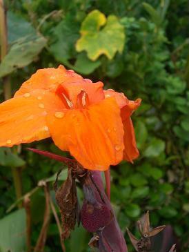 上総にて・・・この綺麗なお花はなんて言うんだろう?