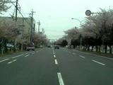 三滝通り(4/14)