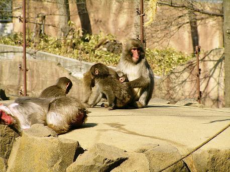 八木山動物園6