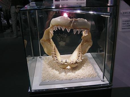 こんにちはお魚さん展3