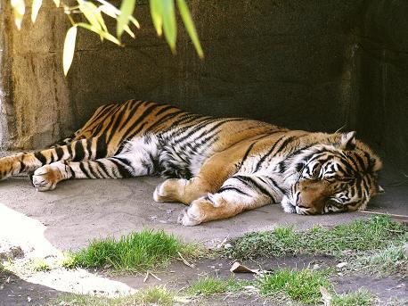 八木山動物園5