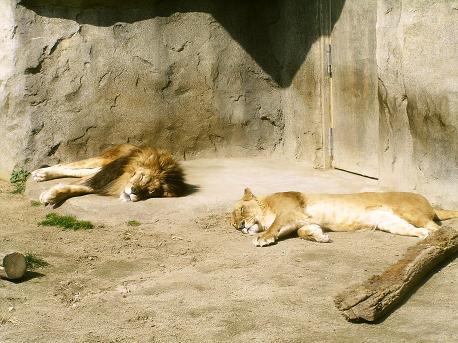 八木山動物園4