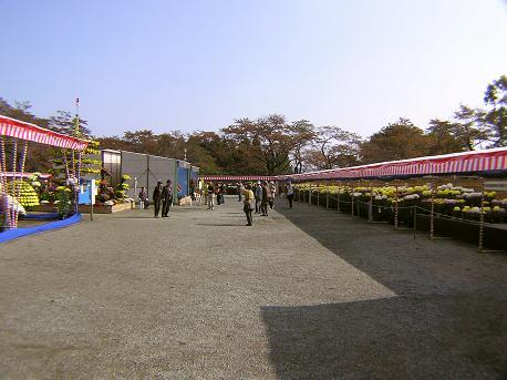 大菊花展2