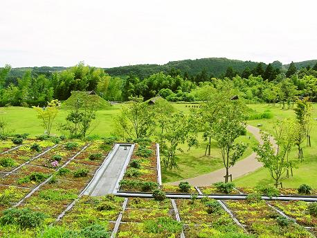 縄文の森広場