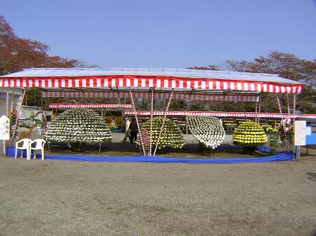 大菊花展3