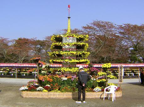 大菊花展4
