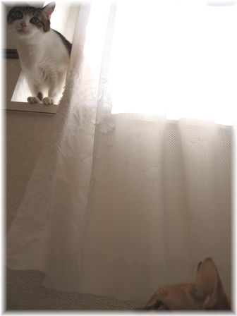 二猫の位置関係