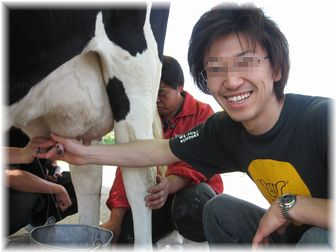 うしの乳搾り(相方)