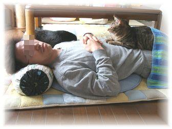 タロウとお昼寝