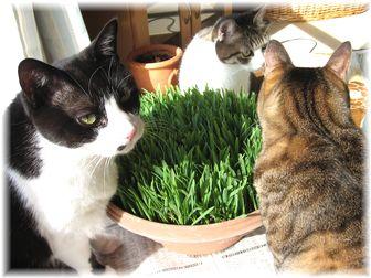 2007.3.1 猫草