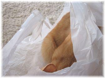 袋とチャンちゃん 4