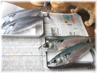 お魚とボムボム