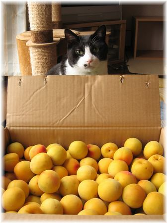 2007.6.25 完熟梅とナオミ