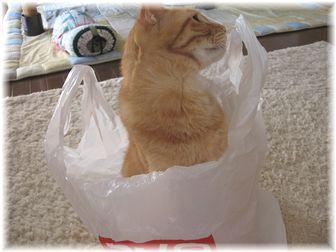 袋とチャンちゃん 3