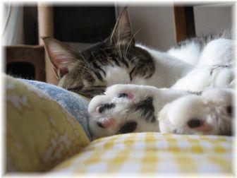2007.5.19 スージー枕♪