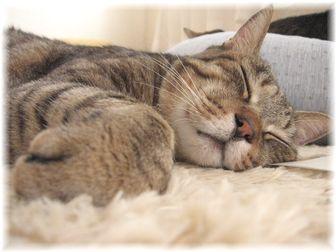 タロウの寝顔