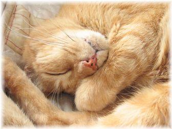 ボムボムの寝顔アップ