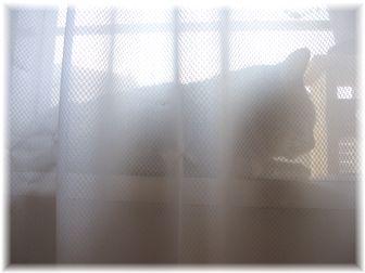 カーテンの影に・・・
