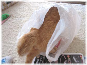 袋とチャンちゃん 1