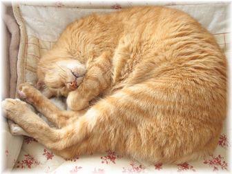 ボムボムの寝顔