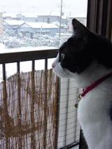 saumoyuki