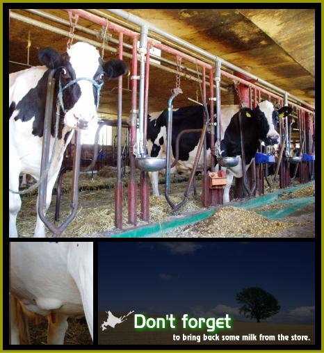 牛だもォー。